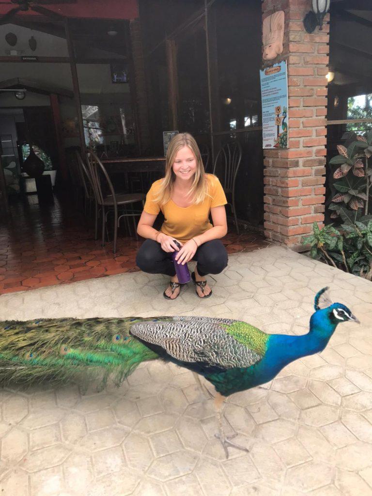 volunteering_with_peacocks
